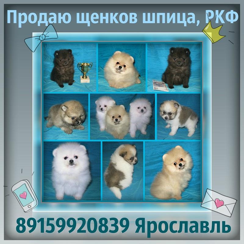 http://www.imageup.ru/img115/2718461/shhenki-mishki-moi.jpg