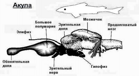 http://www.imageup.ru/img124/1511844/akula.jpg