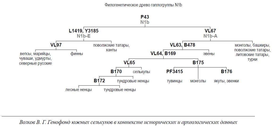 filogeneticheskoe-drevo-gaplogruppy-n1b.