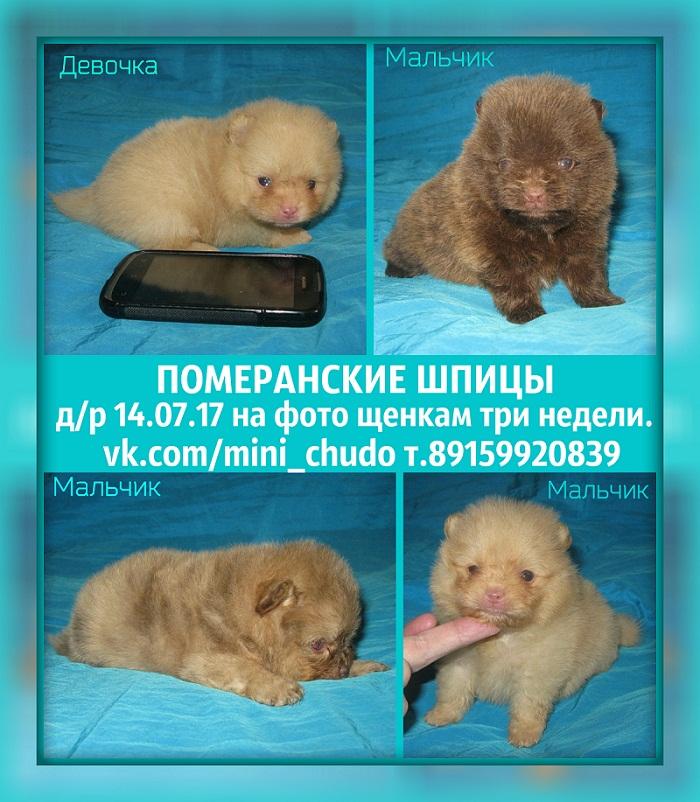 http://www.imageup.ru/img174/2831475/shhenki-ot-vesnushki.jpg