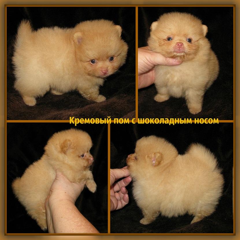 http://www.imageup.ru/img19/2845407/krem-s-shok-nosikom.jpg