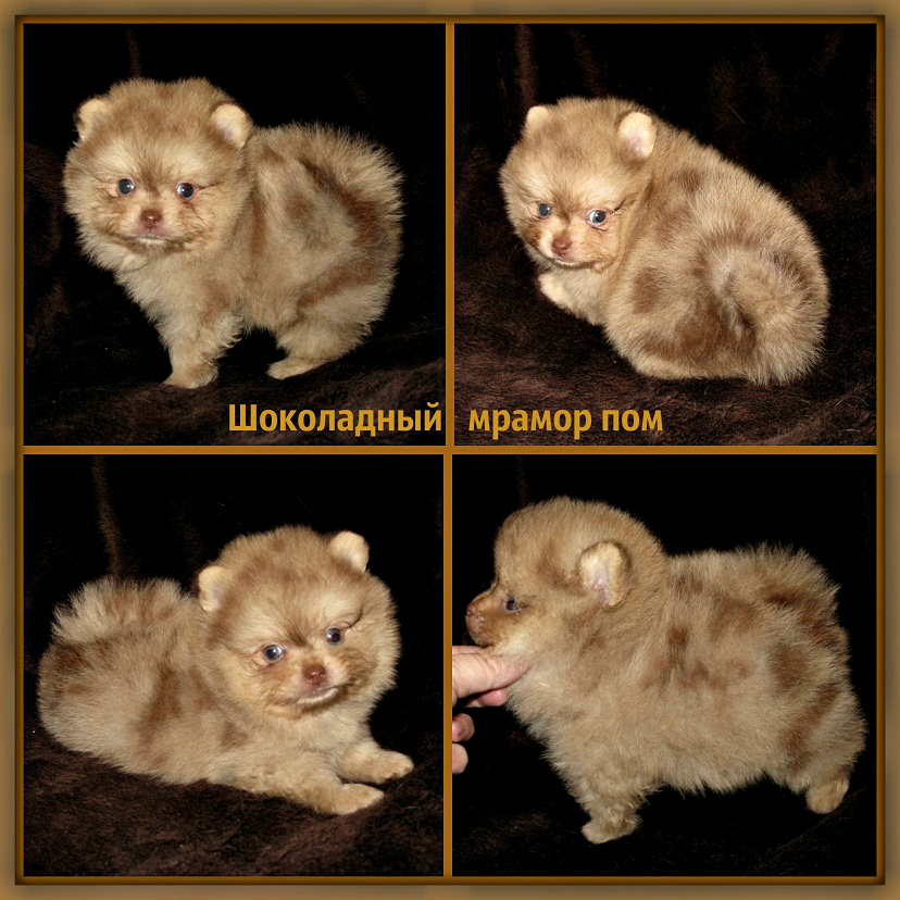 http://www.imageup.ru/img37/2869391/shokoladnyjj-mramor-pom.jpg