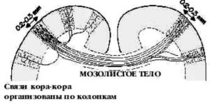 rabota-kory-4.jpg