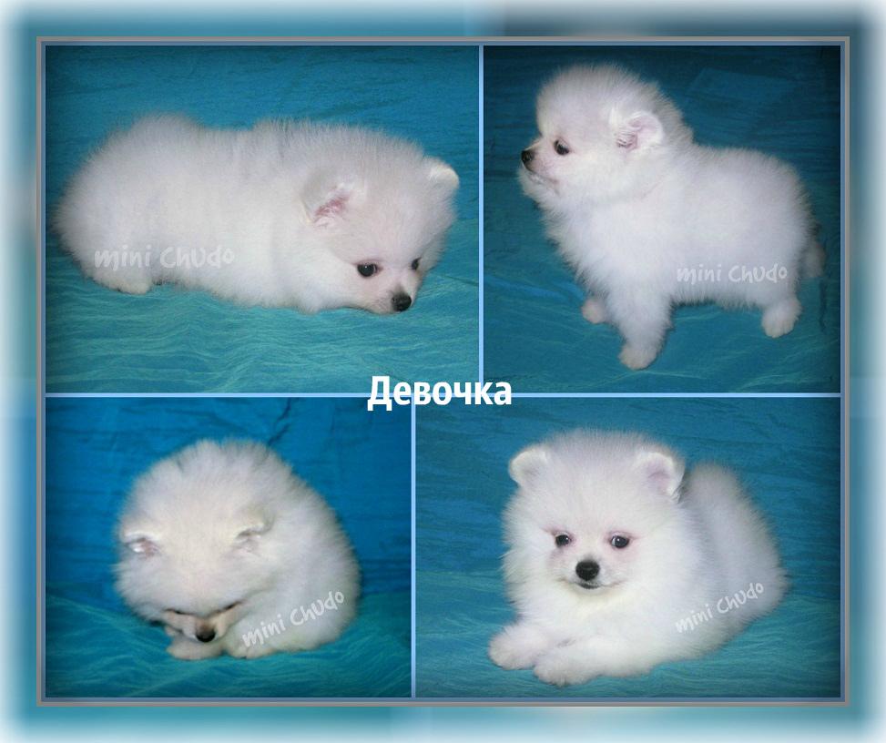 http://www.imageup.ru/img63/2690928/devochka-belochka.jpg