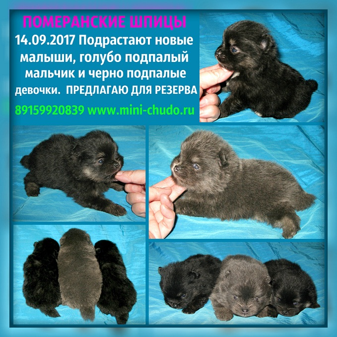 http://www.imageup.ru/img74/2884326/shhenki-na-prodajhu.jpg