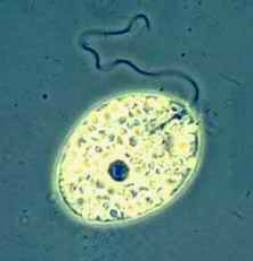 http://www.imageup.ru/img79/1499033/bakteriya2.jpg