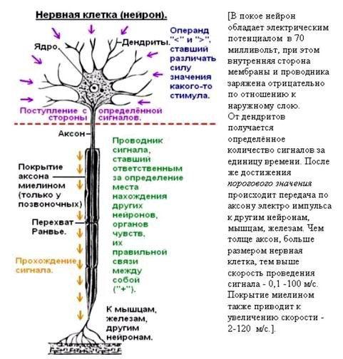 http://www.imageup.ru/img79/1499047/bakteriya4.jpg