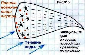 http://www.imageup.ru/img79/1499052/odnokletochnye18.jpg